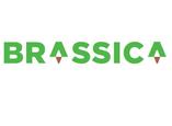 Brassica Trade
