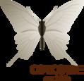 Concorde Orchids | Honselersdijk